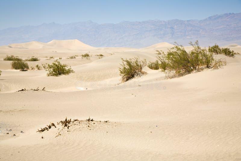 Getrocknete Wüste gras in den Süßhülsenbaum-Ebenen-Sanddünen lizenzfreie stockbilder