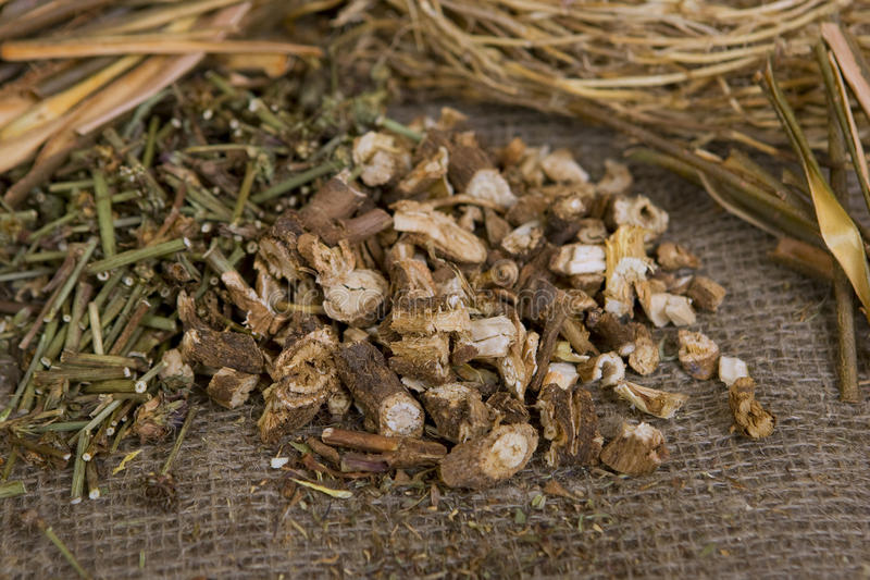 Getrocknete wilde Zichorie (trockene medizinische Kräuter) stockfotos