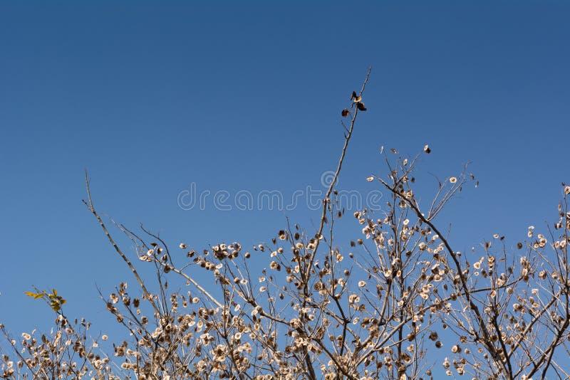 Getrockneter Baum stockbild