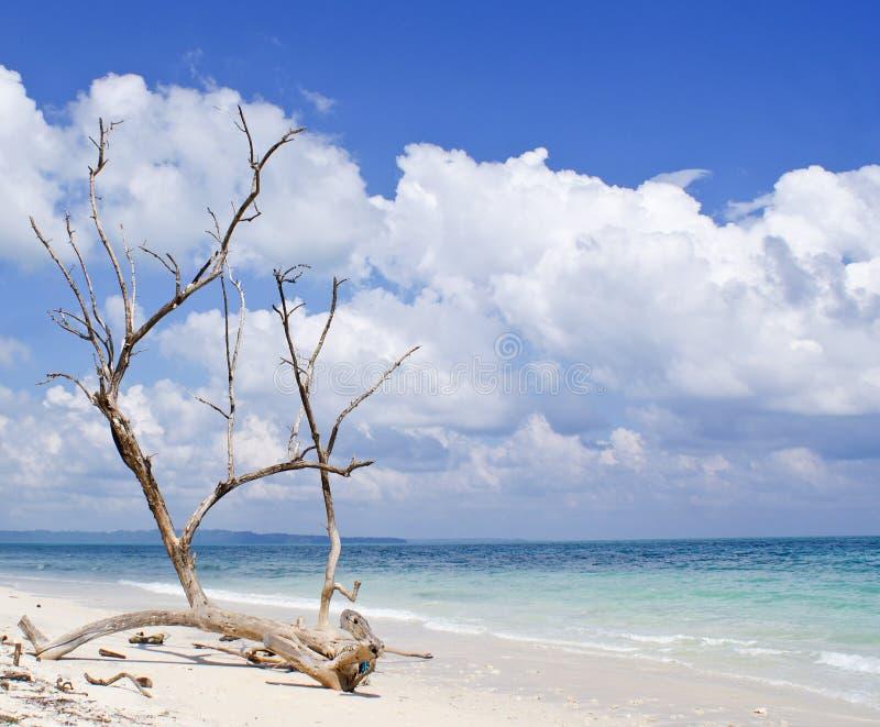 Getrockneter Baumstamm mit bloßen Niederlassungen auf dem Hintergrund von blauem Meer lizenzfreie stockfotografie