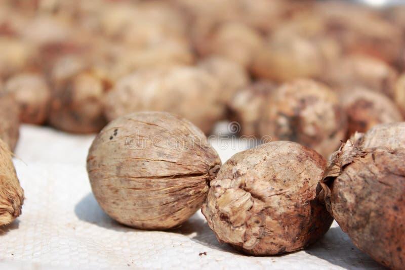 Getrockneter Betel - Nüsse oder Arekanuss-Nüsse stockfoto