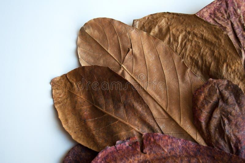Getrockneter Blätter Bronzeherbarium stockbild