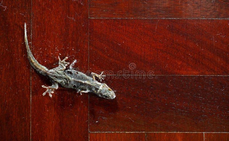 Getrockneter gemeiner Haus-Gecko auf Bretterboden lizenzfreie stockfotos