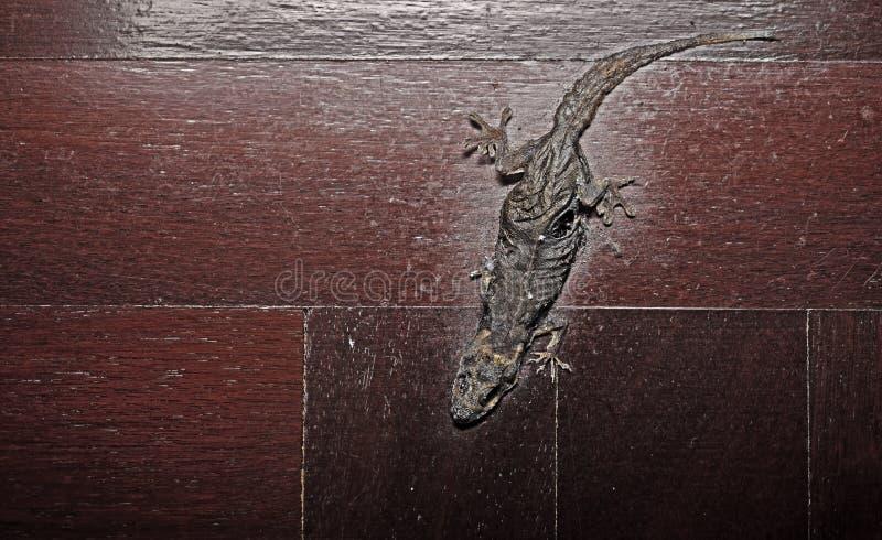 Getrockneter gemeiner Haus-Gecko auf Bretterboden lizenzfreie stockbilder