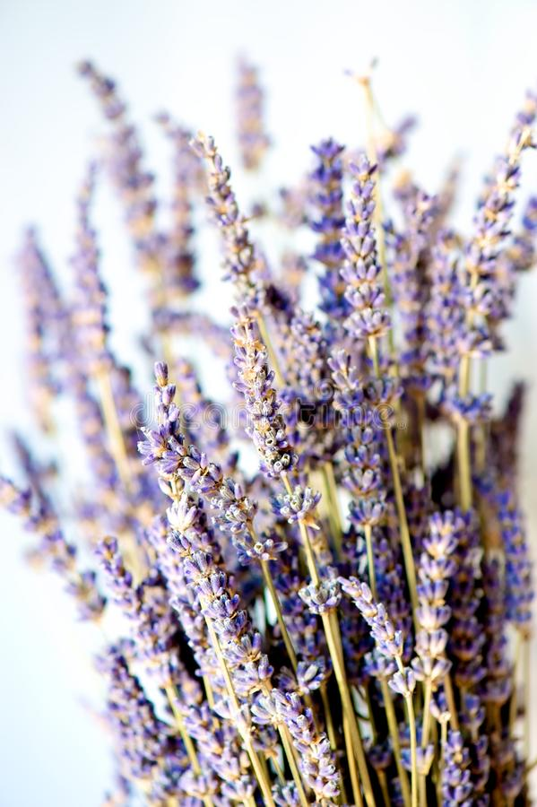 Getrockneter Lavendel stockfotos