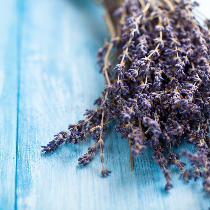 Getrockneter Lavendel lizenzfreie stockfotos