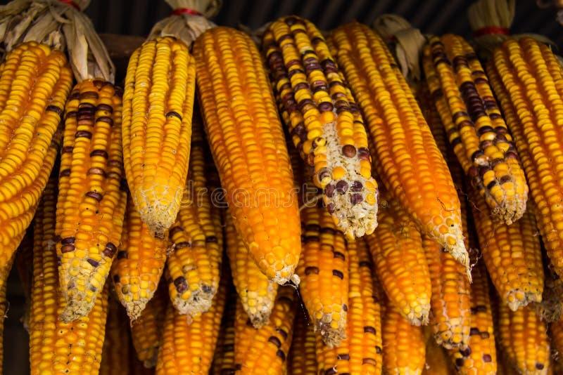 Getrockneter Mais stockbilder