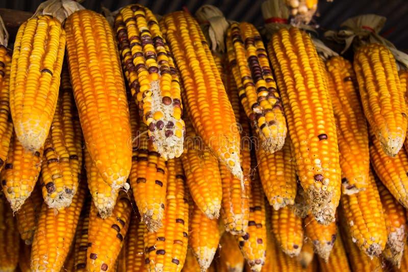 Getrockneter Mais lizenzfreie stockbilder