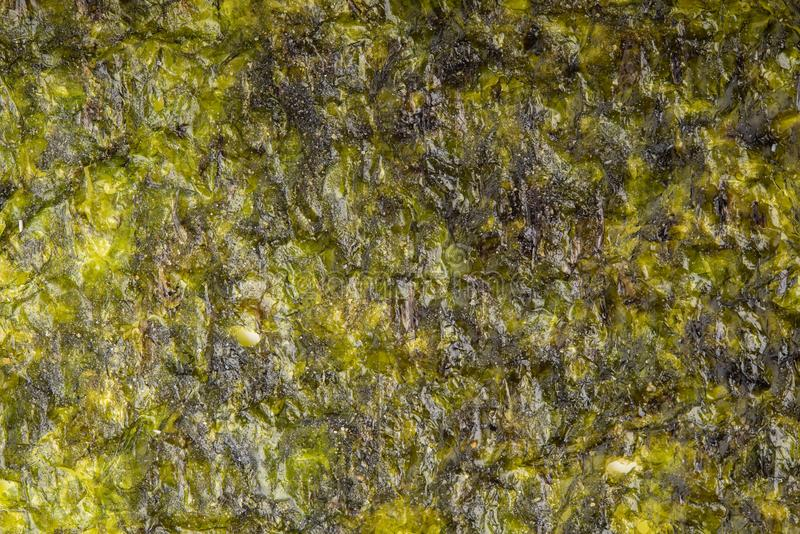 Getrockneter Meerespflanzenblatthintergrund Nahaufnahme trockenes nori japanisches Lebensmittel t stockbild