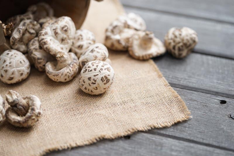 Getrockneter Pilz Weichzeichnung des Shiitakepilzes lizenzfreies stockfoto