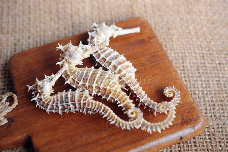 getrockneter Seahorse auf hölzernem Hintergrund lizenzfreie stockbilder