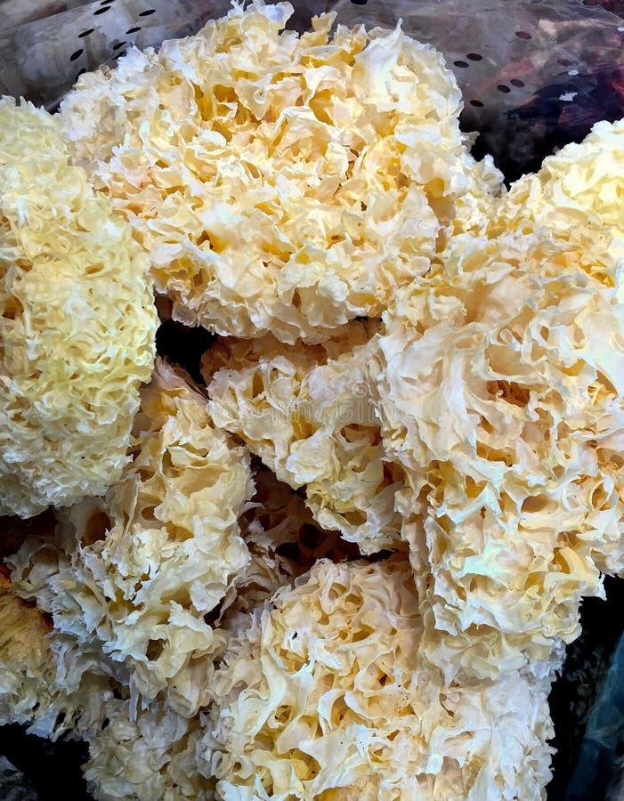 Getrockneter Tremella fuciformis Berk-Pilz stockbilder
