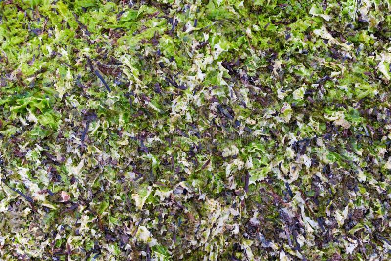 Download Getrockneter Und Neuer Laminaria Als Hintergrund Stockfoto - Bild von mariniert, cuisine: 26370968