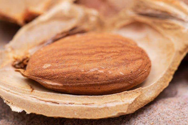 Getrocknetes Aprikosenkerne der Samen einer Aprikose, nannten h?ufig einen ?Stein ?auf Naturstein Amygdalin Vitamin B17 lizenzfreies stockfoto