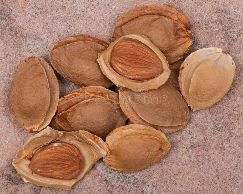 Getrocknetes Aprikosenkerne der Samen einer Aprikose, nannten h?ufig einen ?Stein ?auf Naturstein Amygdalin Vitamin B17 stockbild