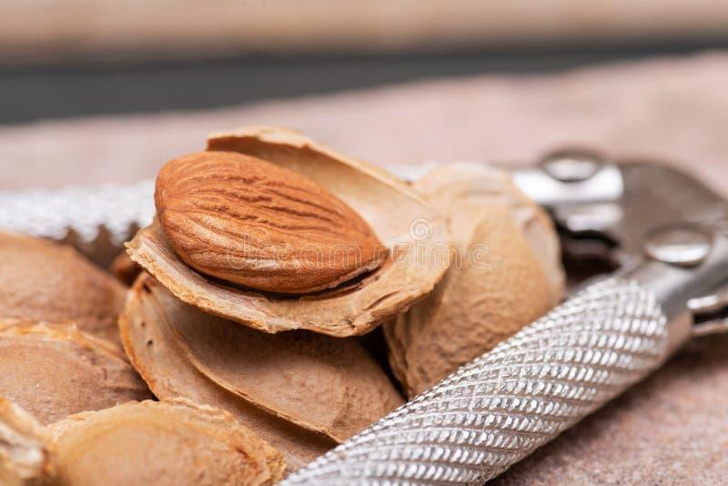 Getrocknetes Aprikosenkerne der Samen einer Aprikose, nannten h?ufig einen ?Stein ?und Edelstahlnussknacker auf Naturstein stockbilder