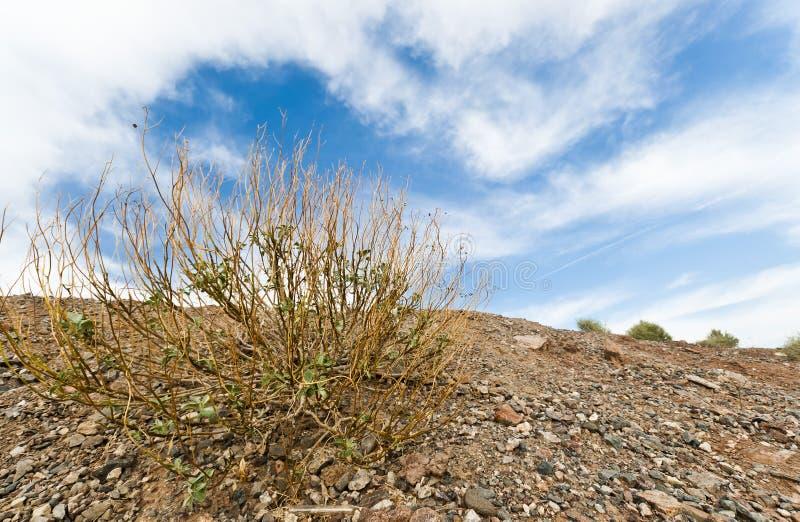 Getrocknetes Gras auf Arizona-Wüste lizenzfreies stockbild