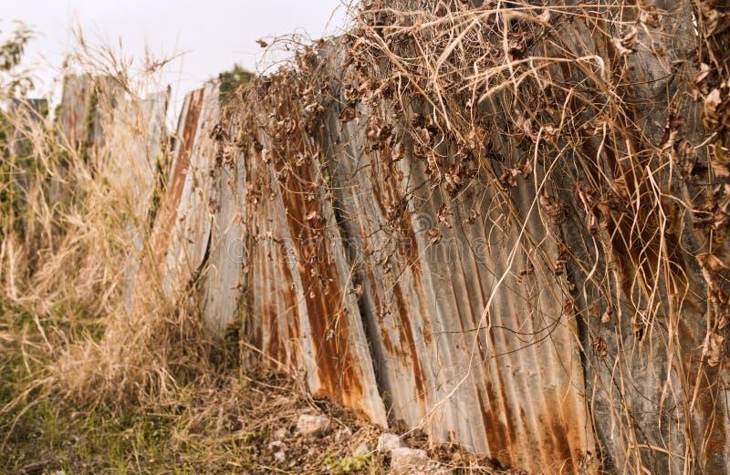 Getrocknetes Gras und Zinkbleche stockfoto