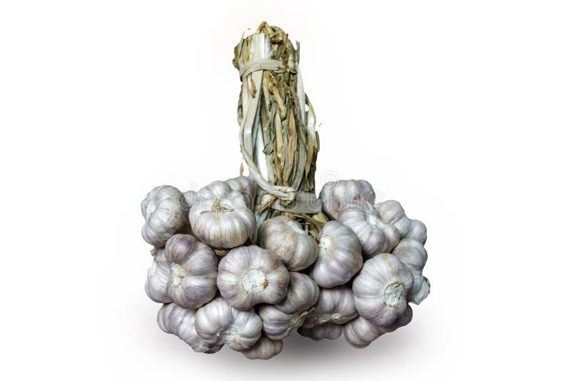 Getrocknetes Knoblauchbioprodukt weitverbreitet in der unterschiedlicher Nationsküche und -medizin stockfoto
