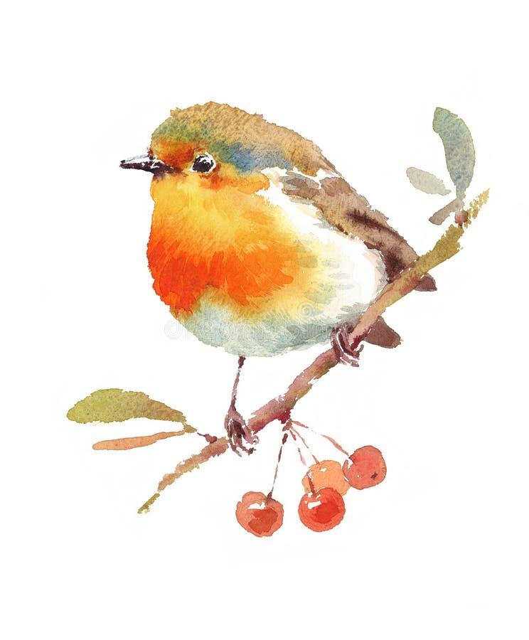 Getrokken de Illustratiehand van Robin Bird en van de Bessenwaterverf stock illustratie
