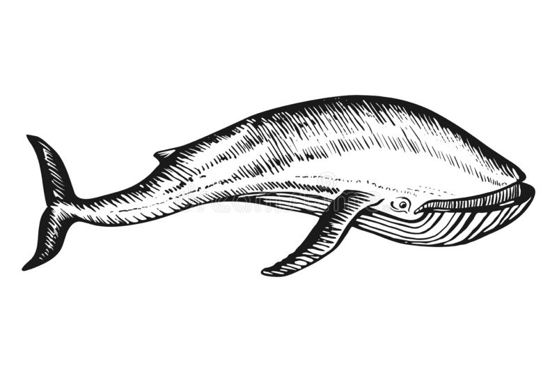 Getrokken de schetsvector van de walviskrabbel hand stock illustratie
