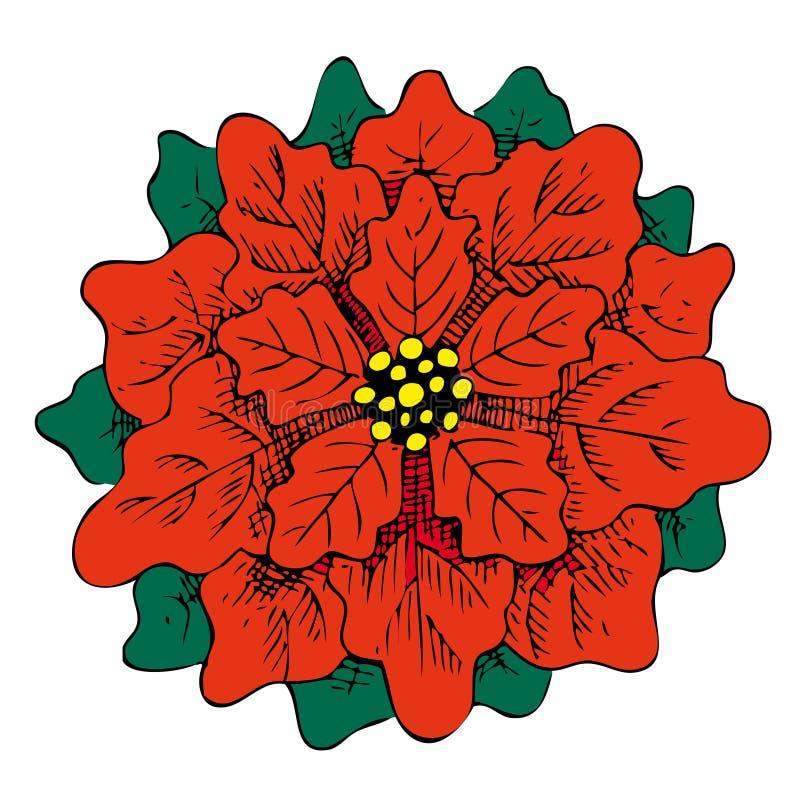 Getrokken illustratie van de poinsettia de rode bloem hand royalty-vrije stock foto's