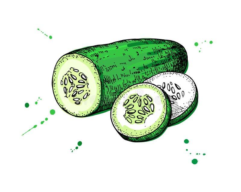 Getrokken komkommerhand komkommer en gesneden stukken vector illustratie