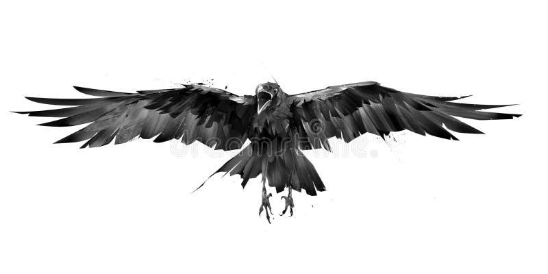 Getrokken kraaivogel tijdens de vlucht van de voorzijde op een witte achtergrond vector illustratie