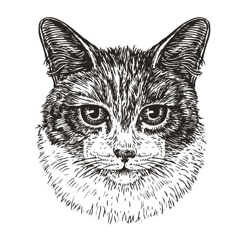 Getrokken portret van leuke kat Dier, pot, huisdierenschets Uitstekende vectorillustratie royalty-vrije illustratie
