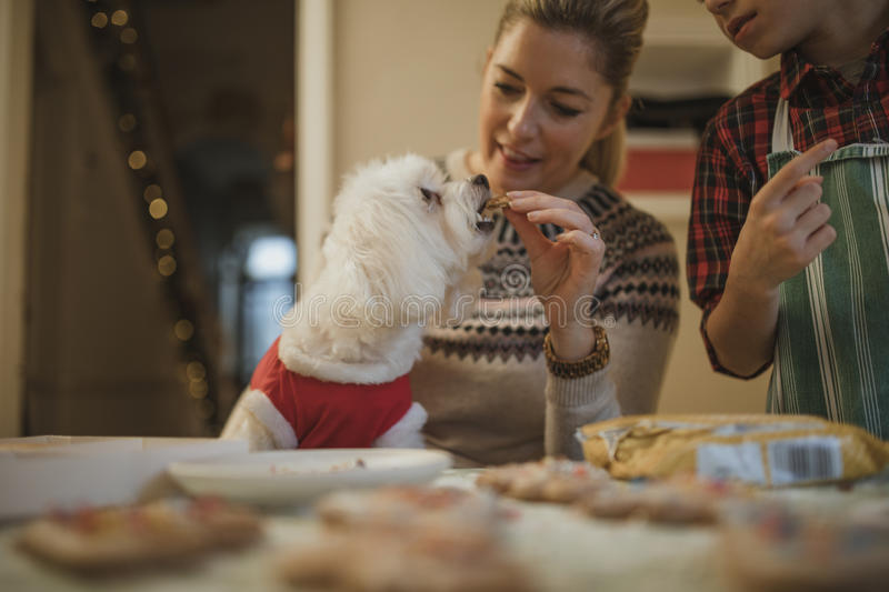 Getting A Christmas Treat royalty free stock images