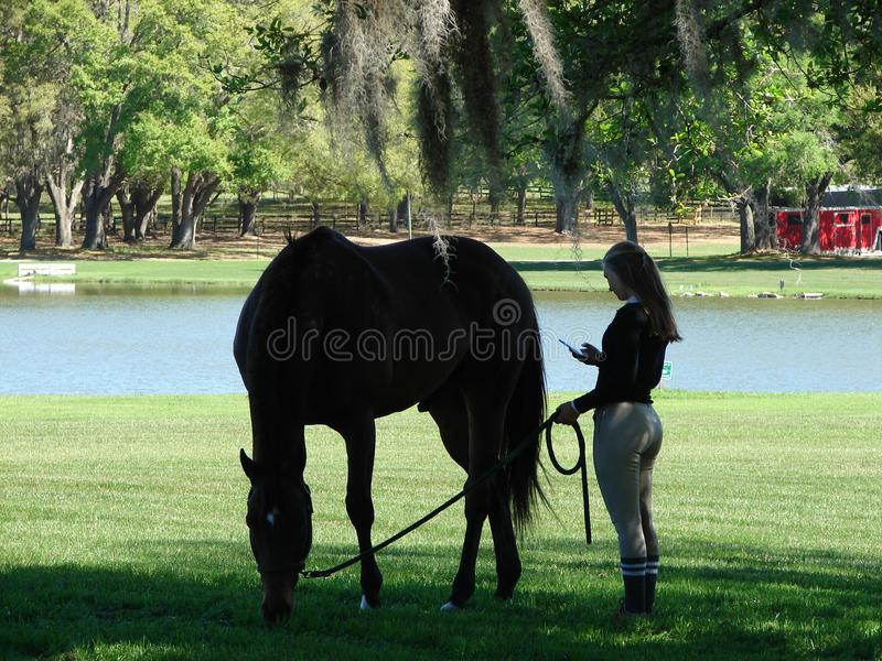 Getting ready for show. Florida Horse show stock photos