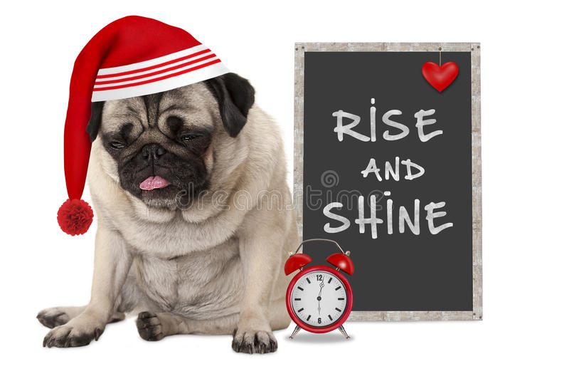 Getting up in early morning, grumpy pug puppy dog with red sleeping cap, alarm clock and sign with text rise and shine. Isolated on white background royalty free stock image