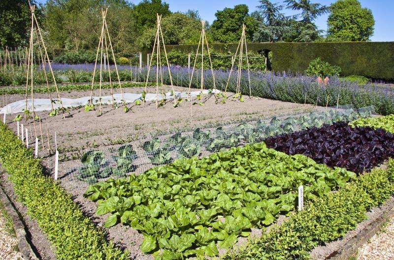 Geummauerter Gemüsegarten stockbilder