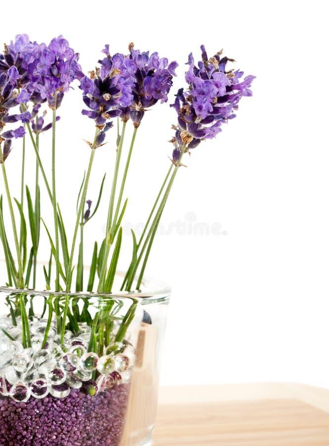 Geurig boeket van lavendelbloemen in glasvaas royalty-vrije stock fotografie