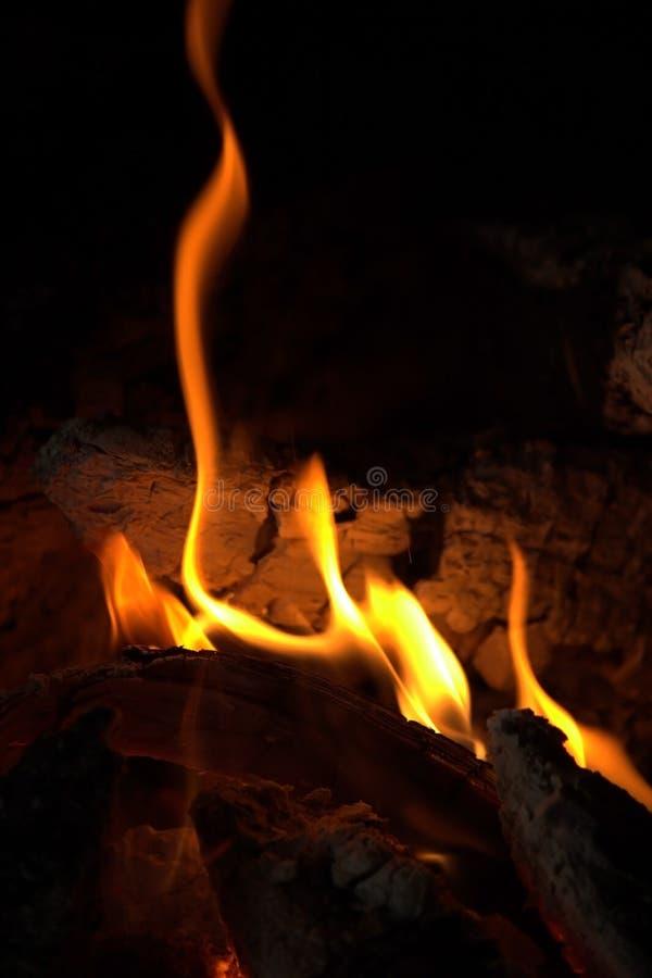 Gevaarlijke Brand die Hout verslinden - Forest Fire royalty-vrije stock foto's