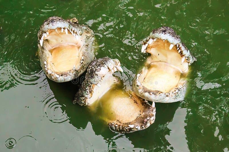 Gevaarlijke reptielen met scherpe tanden royalty-vrije stock afbeelding