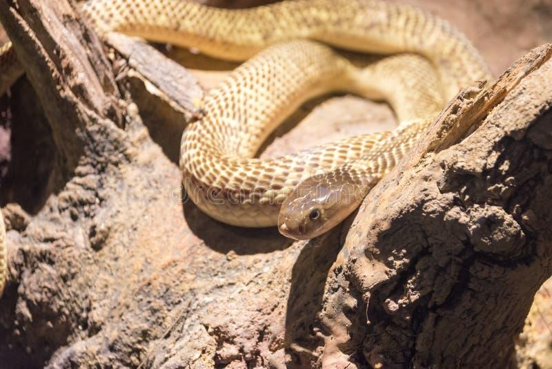 Gevaarlijke wilde slang stock fotografie
