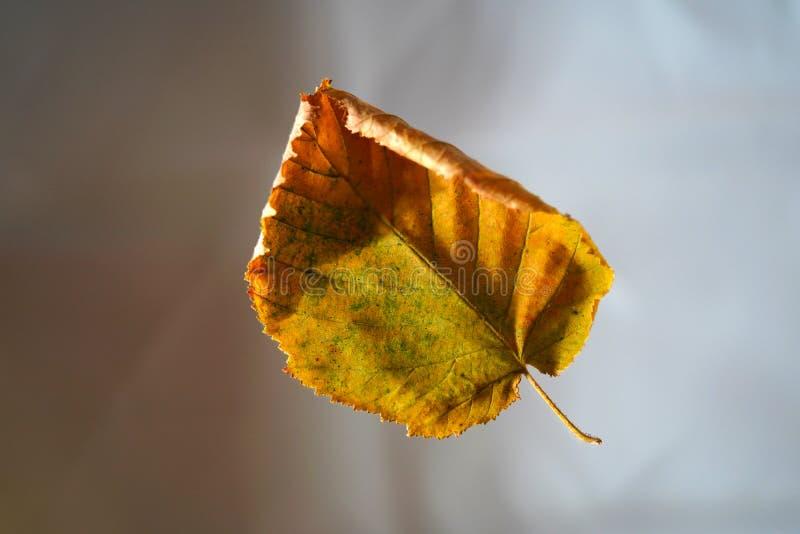 Gevallen Autumn Leaf On Blurred Background stock foto