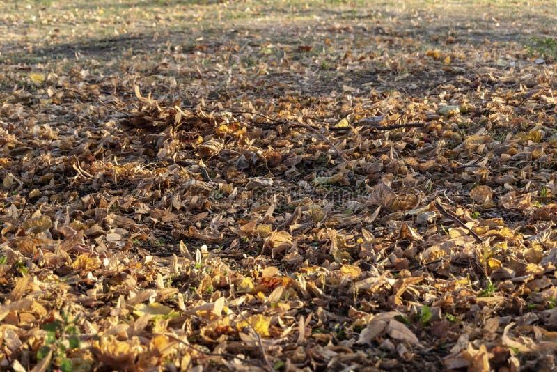 Gevallen Autumn Leaves, midden oktober royalty-vrije stock fotografie