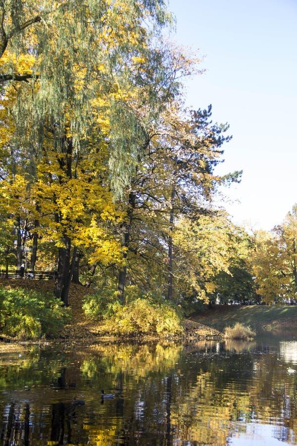 Gevallen bezinningen in de bladeren van de waterherfst stock foto