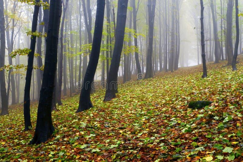 Gevallen bladeren in de herfst bos en geheimzinnige mist. stock foto's