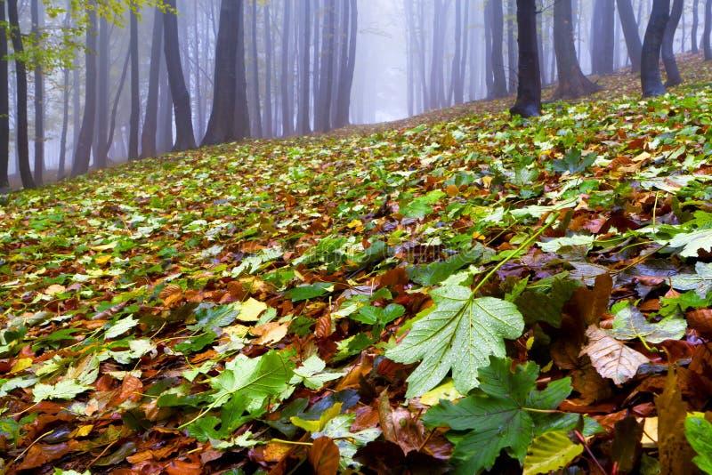 Gevallen bladeren in de herfst bos en geheimzinnige mist. royalty-vrije stock foto's