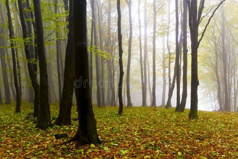 Gevallen bladeren in de herfst bos en geheimzinnige mist. royalty-vrije stock fotografie
