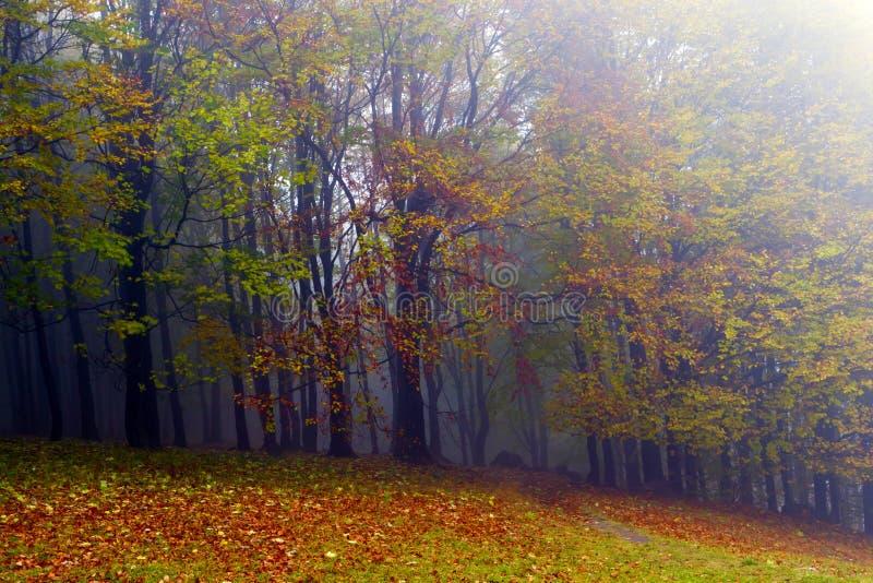 Gevallen bladeren in de herfst bos en geheimzinnige mist. stock afbeelding