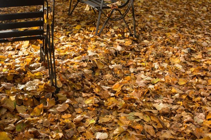 Gevallen bladeren in een park stock afbeeldingen