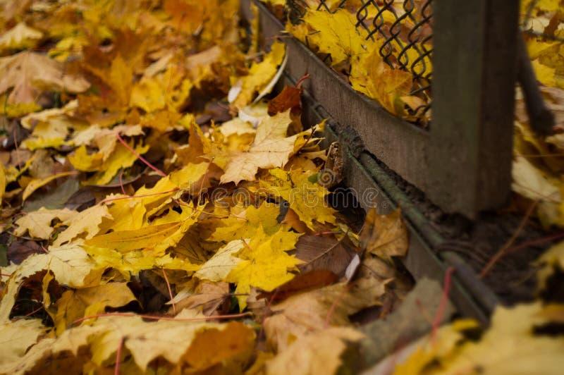 Gevallen bladeren en een omheining royalty-vrije stock afbeelding