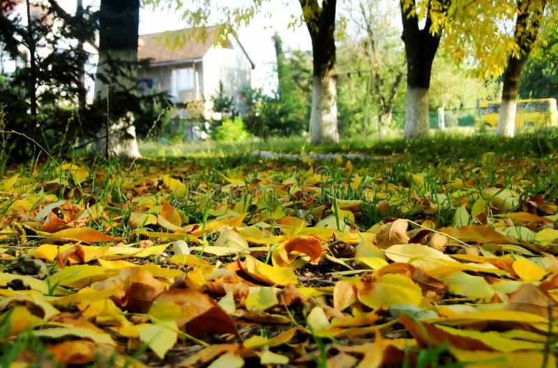Gevallen bladeren in het stadspark in daling royalty-vrije stock foto's