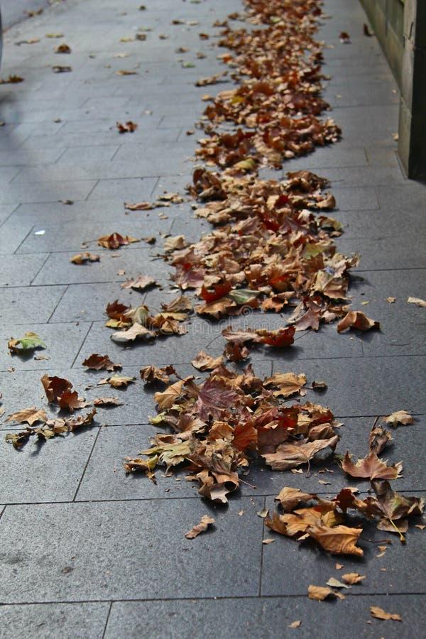Gevallen bladeren op de bestrating royalty-vrije stock foto