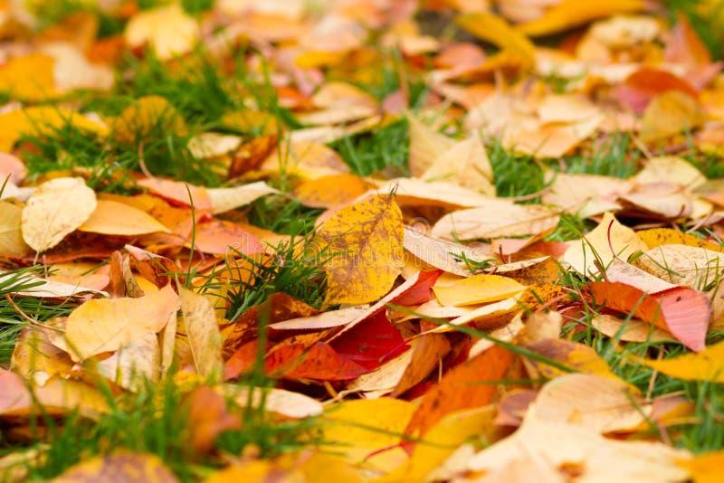 Gevallen Bladeren op Gras stock foto's
