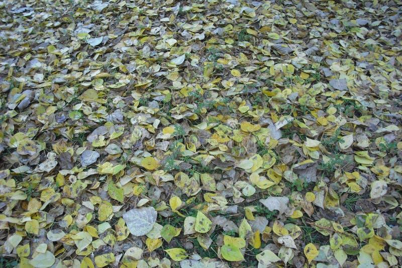 Gevallen bladeren op het groene gras royalty-vrije stock fotografie